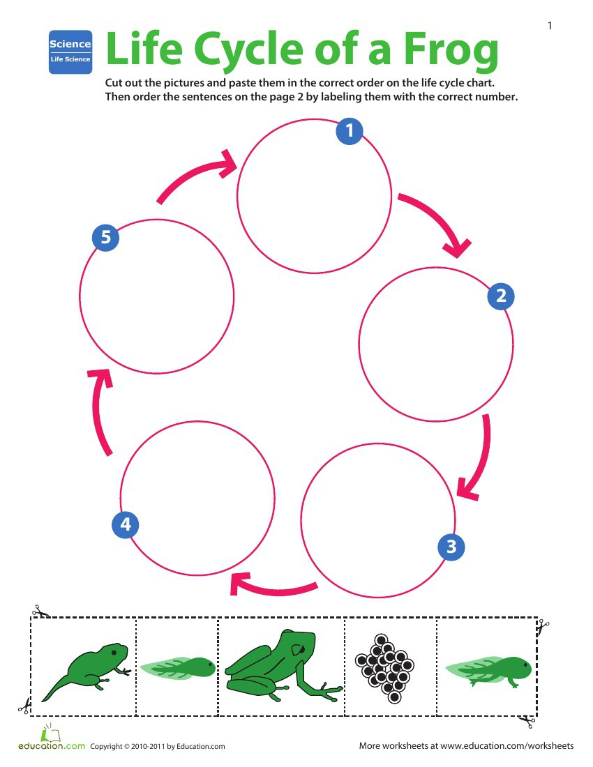 All About Fun Facts About Human Life Cycle For Kids Kidskunstfo